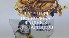 Чудесный огород Натальи - YouTube