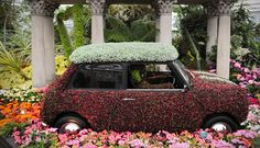 SA grabs gold at the Chelsea flower show
