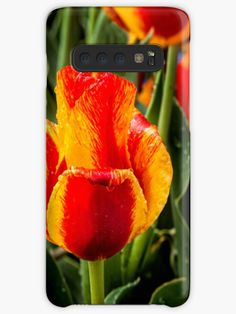 #Tulip ##Samsung #Galaxy #Cases Galaxy Phone Cases, Samsung Galaxy, Yellow Tulips, Orange Yellow, Framed Prints, Canvas Prints, Art Prints, Samsung Cases, Iphone Cases