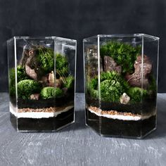A lush garden landscape scene is planted using live mosses inside a geometric shaped jar. Virtually unbreakable, the crystal clear acrylic hexagon houses layers of sand and soil, rock, petrified wood, and a variety of live moss.