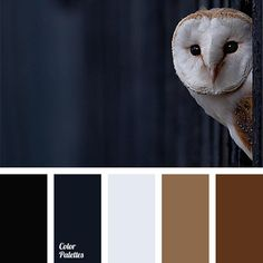 black and dark blue, cold and warm shades, color combination for winter, color of owls plumage, dark Gold Color Palettes, Blue Colour Palette, Gold Colour, Navy Color, Room Colors, House Colors, Colours, Color Concept, Brown And Blue Living Room