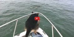 This Dog Became Excited On Seeing Dolphin…Watch What Happens Next. ROTFL!