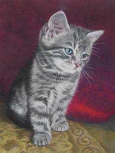 Cat Gallery   www.janetpidoux.co.uk