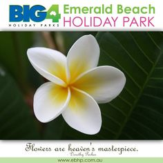 Spend time with your loved ones EmeraldBeachHoliday Click Here: http://www.ebhp.com.au  #EBHP #EmeraldBeach #HolidayParks #BIG4 #CoffsHarbour #CoffsCoast #CaravanPark EmeraldBeachHoliday Web http://www.ebhp.com.au Facebook http://www.facebook.com/emeraldbeachhp Twitter http://twitter.com/emeraldbeachhp Pinterest http://www.pinterest.com/EmeraldBeachAU Instagram http://instagram.com/big4emeraldbeach