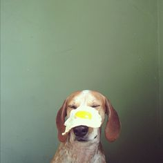 Ever had egg on your face?