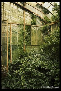 This reminds me of an abandoned green house I once played in. It was behind a house we lived in in Virginia...