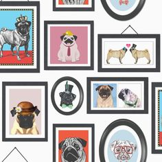Pugs Life Multi / White wallpaper by Albany