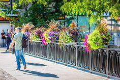 Jak ukwiecić mosty? Skrzynie kwiatowe do zadań specjalnych - Inspirowani Naturą Flower Boxes, Flowers, Cities, Decor, Window Boxes, Decoration, Planter Boxes, Decorating, Royal Icing Flowers