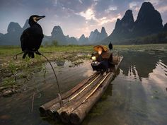 "PHOTOGRAPH BY ABDERAZAK TISSOUKAI, NATIONAL GEOGRAPHIC National Geographic Bird Feeders Your Shot member Abderazak Tissoukai was near Xingping in China's Guanxi region when he captured this picture of a cormorant fisherman at sunset. ""Xingping is definitely one the most beautiful places in China, with its scenic karst landscapes [and] traditional and genuine people,"" he writes. Curious to learn more about the local practice of cormorant fishing—in which trained birds with snared throats…"