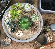 Cactus + Succulent Desertscape. I'm in love with all of these textures! #cactus #succulent #desert #desertscape #plants