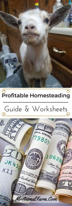 Turning your homestead into a profitable business is possible!  Make sure you track all the money you make homesteading to see if you are making a profit or not.