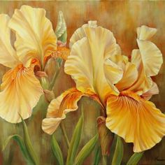 Yellow Iris Acrylic on canvas inches by Marianne Broome. Iris Flowers, Exotic Flowers, Beautiful Flowers, Red Tulips, Yellow Roses, Art Floral, Irises, Iris Art, White Iris