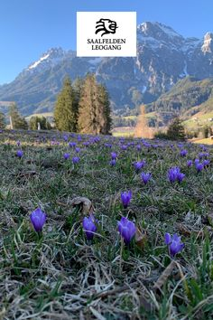 Der Frühling in Saalfelden Leogang ist erwacht! Salzburg, Mountains, Nature, Travel, Nice Asses, Naturaleza, Viajes, Destinations, Traveling