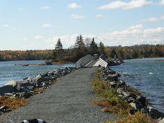 salt marsh trail nova scotia bridge - Google Search