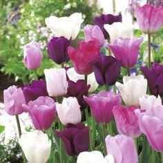 Krokusse Pflanzen - Krokusse Sind Nicht Nur Frühlingboten Hinweise Krokus Pflanzen Rasen Blumentopf