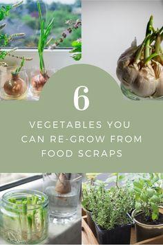 Genius hacks to reduce your food waste and grow your own veg Regrow Vegetables, Veggies, Back Gardens, Outdoor Gardens, Vegetarian Cooking, Cooking Food, Garden Seeds, Companion Planting, Raised Garden Beds