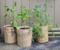10 upcycling ideas for the garden upcycling garden ideas: burlap-covered pails Mini Plants, Potted Plants, Raised Garden Beds, Raised Beds, Container Plants, Container Gardening, Garden Planters, Planter Pots, Secret Garden Book