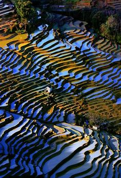 Terraced rice fields # 8 by Ngo Nguyen Huynh Trung Tin, via Aerial Photography, Landscape Photography, Nature Photography, Beautiful Vietnam, Foto Art, Birds Eye View, Land Art, Aerial View, Amazing Nature