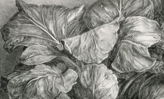 Hortensia de invierno | Javier Aramburu