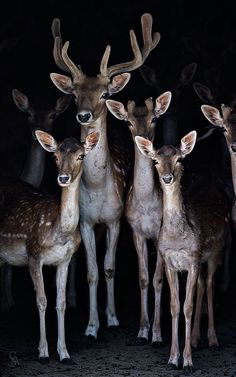 Darling deer!