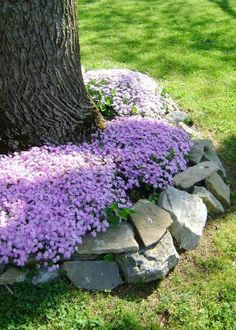Flowers and Natural Stones Around a Tree #gardeningideas Front House Landscaping, Rustic Landscaping, Landscaping Trees, Front Yard Landscape Design, Curb Appeal Landscaping, Rocks In Landscaping, Landscaping Ideas For Backyard, Landscaping Borders, Front Yard Garden Design