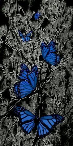 Mariposas de todos los colores