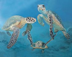 Sea Turtles Giclee Art Print by candacedawson on Etsy. Sea Turtle Art, Baby Sea Turtles, Cute Turtles, Turtle Love, Turtle Quilt, Ocean Creatures, Tortoises, Ocean Life, Marine Life