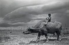 Marajó: o menino e o búfalo.  Foto de Luiz Braga (direitos reservados do fotógrafo)