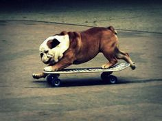 Goal: Teach Bentley how to skateboard. It's a long shot..i know