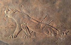 """""""Leonessa morente"""" dal palazzo di Ninive (antica città della Mesopotamia-capitale del regno assiro), VII sec. a.C., bassorilievo su alabastro gessoso. Londra, British Museum."""