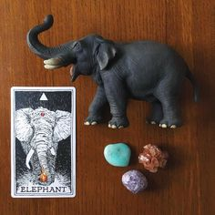 10/28/16 Animal Spirit Reading: Elephant. Elephant represents great wisdom and unbridled passion, revealing to us how wonderfully these two energies work together. They are largest of the land animals and have a close connection to both the sky (and clouds) and the earth. They follow known pathways and create new ones through their keen sense of smell and touch. They do not need their eyes to tell them what they already know. The elephant reminds you to rely on what you already know...