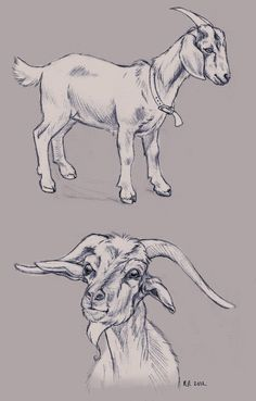 Goat Sketches by BeccaPearl.deviantart.com on @DeviantArt