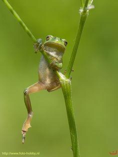 """""""Tree frog"""" by Walter Soestbergen, via 500px."""