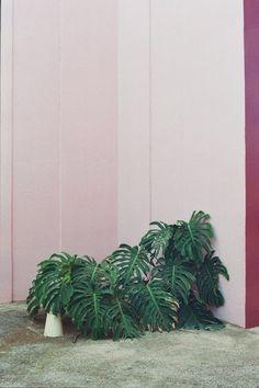 Botanicals and blush.