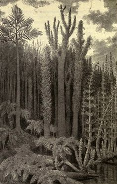 Scientific Illustration | antediluvianechoes: Carboniferous forest scene by Bruce Horsfall