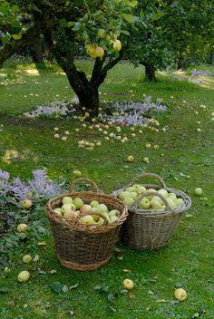 ~ wonderful memories of apple picking! ~ wonderful memories of apple picking! ~ wonderful memories of apple picking! Country Life, Country Living, Country Farm, Country Roads, Nature Aesthetic, Summer Aesthetic, Down On The Farm, Life On The Farm, Parcs