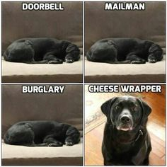 Relatable? Yet statistics prove that your furry friend remains the best deterrent in the event of home #burglaries.  #SafetyFirst #Manvics