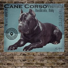 Cane Corso VineyardsPrint 16x20See last photo by BarkArtPortraits