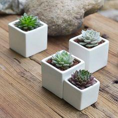 White ceramic square Succulent planter have a by ClouddesignUS