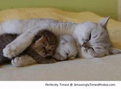 Please hold me tight – Sleep has never been so cuddly and warm. These three just like showing you how adorable it can be.