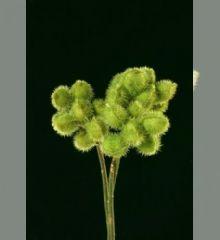 Produtos - Emília Flores Tropicais
