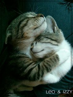 22 trendy cats sleeping together kittens Cute Cats And Kittens, I Love Cats, Crazy Cats, Kittens Cutest, Ragdoll Kittens, Tabby Cats, Bengal Cats, Animals And Pets, Baby Animals