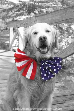 Celebrating Memorial Day weekend in style #animalsinbowtie   Memorial Day Weekend - Start of Summer FUN