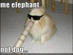 Funny Horse Pictures with Captions 30 Funny animal captions - part 17 pics), funny caption, animal . Funny Dog Captions, Animal Captions, Funny Animals With Captions, Funny Animal Jokes, Funny Dog Memes, Funny Pictures With Captions, Really Funny Memes, Cute Funny Animals, Funny Animal Pictures