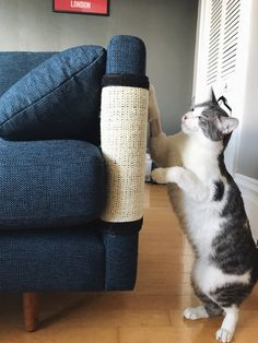 """""""If you have a sofa that's fabric rather than leather, these protector things are absolute life savers. We got these after we replaced our old IKEA couch which had been wrecked by our cats."""" – ContinentsOrder them for 58p each + £3.99 shipping here."""