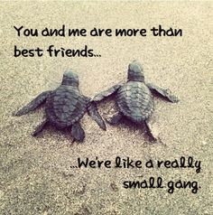 Turtle Quotes Adorable Small Beginnings Big Things Motivation Turtles Quotes Wellness .