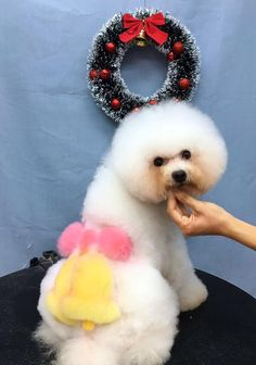 87 best opawz grooming contest images creative grooming pet rh pinterest com