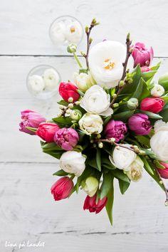 HURRA för kära mamsen idag!   Jag älskar mars månad när kalasen avlöser varann.   Snö, sol och regn om vartannat, men det är våren ...