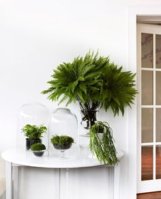 """""""Embrace the simplicity of living greenery in glass vessels to make fresh, dynamic statements in key areas of the home year-round,"""" says florist [Fleur McHarg](http://www.fleurs.com.au/?utm_campaign=supplier/