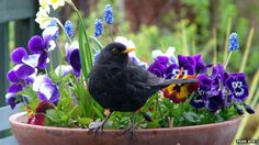 If you'd love to see more wildlife in your garden, clever choices for your borders and herb patches can give nature a helping hand. Top Ten Plants and Gardening Tips Vegetable Garden, Garden Plants, Garden Birds, Garden Art, Organic Gardening, Gardening Tips, Kitchen Gardening, Organic Farming, Sensory Garden